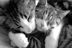 Hugging Cats Cute Pictures-Images