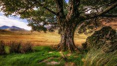 Wielka Brytania, Walia, Park Narodowy Snowdonia, Dolina Nant Gwynant, Góry, Drzewo, Trawa