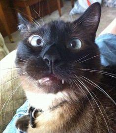 crazy eye cat