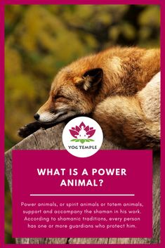 What is a power animal? - How can I find my power animal? Shamanism courses in Austria and Goa/India - Yoga Teacher Training - - Become Yoga Teacher - Become Shaman - Yog Temple - Yoga School and Healing Centre in Austria and Goa/India Ayurveda, Goa Indien, Power Animal, Yoga School, Yoga Teacher Training, Spirit Animal, Shamanism, Animals, Spirit