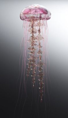Wow ...what long tentacles! Really beautiful! :)