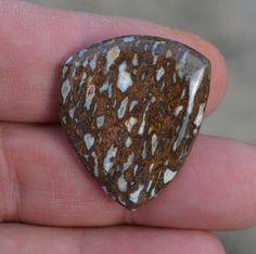 Dinosaur bone guitar pick Doublet w Devonian Coral - prehistoric plectrum  D-16-38
