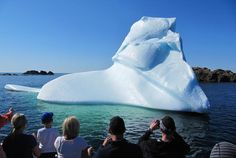 Whale Watching – Newfoundland and Labrador – 22 Species of Ocean Mammals Cool Places To Visit, Places To Go, Alaska Summer, Adventures Abroad, Atlantic Canada, Visit Canada, Newfoundland And Labrador, Shore Excursions, Boat Tours