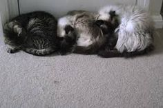 Image result for draught excluder