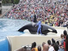 Experts believe that Corky still recognizes the cries of her family pod decades after being taken from the ocean and stuck in a tiny tank.