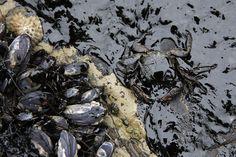 Devastating Photos Show How An Oil Spill Consumed Santa Barbaras Coastline