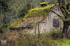 greenhouses made from old windows - Google Search