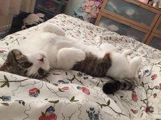 Wanting morning fuss!!