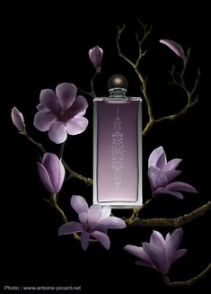 Parfum Bois et Magnolia, Flacon Gravé photographié en clair-obscur. Fragrances Wood and Magnolia with engraved bottle. Photo : Antoine Picard