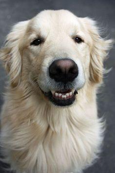 Smiling Golden