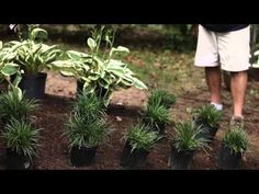 [VIDEO] TIPS ON PLANNING AND PLANTING IN SHADE - http://www.gardenpicsandtips.com/video-tips-on-planning-and-planting-in-shade/