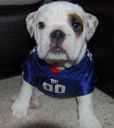 new york giants dog jersey