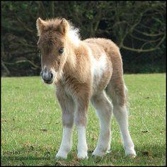 Cute Baby Horses
