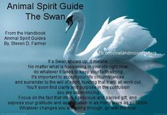 Swan as spirit guide Be a guardian of animals everywhere by becoming an ambassador at http://www.fuzeus.com