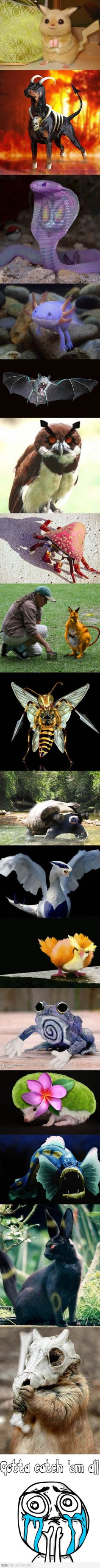 If Pokemon was real - This is all kinds of messed up.