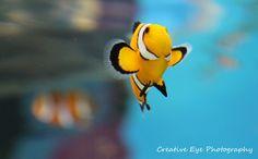 Nemo! Tweety, Fine Art, Fictional Characters, Visual Arts, Fantasy Characters