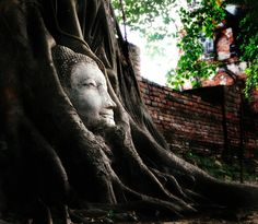 Buddha head in tree roots at the Wat Mahathat Temple entrance in Ayutthaya, Thailand
