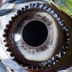 blue yellow macaw parrot close up of eye macro suren manvelyan 10 Detailed Close Ups of Animal Eyes Eye Close Up, Extreme Close Up, Photos Of Eyes, Close Up Photos, Ara Bleu, Photo Oeil, Regard Animal, Georg Christoph Lichtenberg, Nature