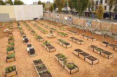 Shifting Growth Community Gardens Photo