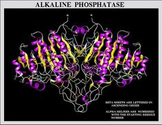 http://liverbasics.com/elevated-alkaline-phosphatase.html Having ...