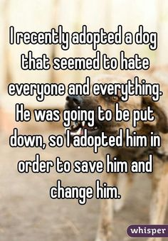 I recently adopted a dog that seemed to hate everyone and everything. He was going to be put down, so I adopted him in order to save him and change him.