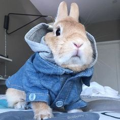 Bunny rabbit in jacket! Cute Baby Bunnies, Funny Bunnies, Cute Baby Animals, Animals And Pets, Funny Animals, Bunny Care, Photo Chat, Cute Creatures, Chinchilla