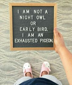 Night owl, early bird and exhausted pigeon.
