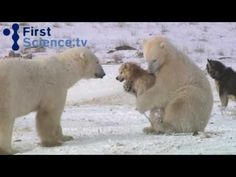 http://www.mnn.com/earth-matters/animals/stories/some-dogs-love-a-good-bear-hug