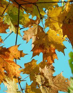 #patternpatisserie: The pretty Autumn fields of Maine