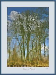 Spiegelung Bäume Blau Gelb