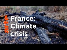 #Sustainability #Media #France #Climate Thankyou (Under 13 Min Video) 🎯⚖️🌏💚♻️🤔🇫🇷 The Vosges Forest Under Threat I ARTE Documentary - YouTube Documentary, Sustainability, Environment, Waves, Youtube, The Documentary, Documentaries, Ocean Waves, Youtubers