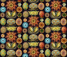 Ernst Haeckel - Szukaj w Google