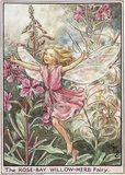 Rose-Bay Willow-Herb Fairy Cicely Marie Barker