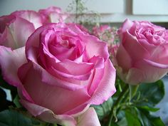 Pink Roses by Zhad_Squad, via Flickr