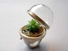 living jewellery - awesome! http://organicgreenroots.files.wordpress.com/2011/11/dome-plant-ring.jpg