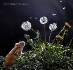 Photograph little dreamer by Elena Eremina on 500px