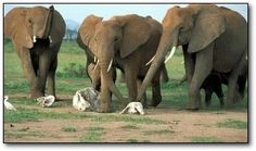 Elephant archaeologists! No, just kidding. It's a funeranniversary.