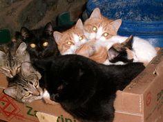 #giardia? #nientepaura basta consultare il #veterinario e i nostri #cani e #gatti sono sani e felici