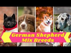 German Shepherd Mix : 20 Most Popular Mix Breed Dogs ! Dog Lovers ! Pet Care - YouTube Police Dog Names, Police Dogs, Pet Names, Cute Names For Dogs, Cute Dogs, Most Popular Dog Names, German Shepherd Mix, Names With Meaning, Mixed Breed