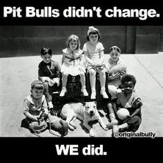 Don't bully my breed