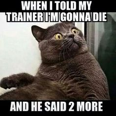 Top 35 most funniest cat quotes funny animal memes, funny jokes, funny animals, Funny Cat Memes, Funny Shit, The Funny, Funny Cats, Funny Animals, Cute Animals, Funniest Animals, Funny Humor, Funny Captions