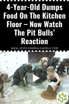 Funny Animal Videos, Cute Funny Animals, Funny Animal Pictures, Funny Dogs, Clever Animals, Dog Videos, Funny Babies, Cute Cats And Dogs, Animals And Pets