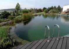 Bio piscina moderna con deck e piante per pulirla