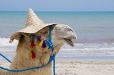 Camel beach near Bodrum in Turkey.... just one of many fun beaches!( It looks like this camel is just chillin:)   On the Beach