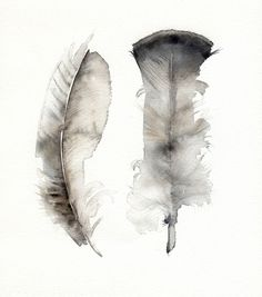 turkey feathers / amber alexander illustration