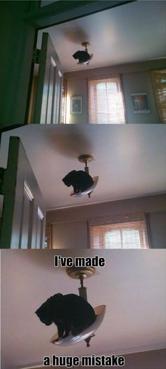 i've made a huge mistake. This is my cat one day.