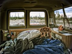 If I was camping in my van, this is where my dog would sleep.