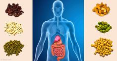 Some microbes ferment fiber, while fermentation byproducts nourish your colon and help calibrate your immune system to prevent inflammatory disorders. http://articles.mercola.com/sites/articles/archive/2015/03/30/fiber-fermentation-gut-health.aspx