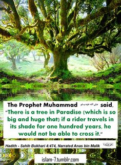 Islamic hadith for Muslims and non-Muslims alike by the Prophet Muhammad (peace be upon him).