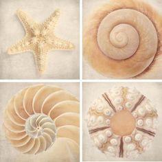 Seashell Art Set